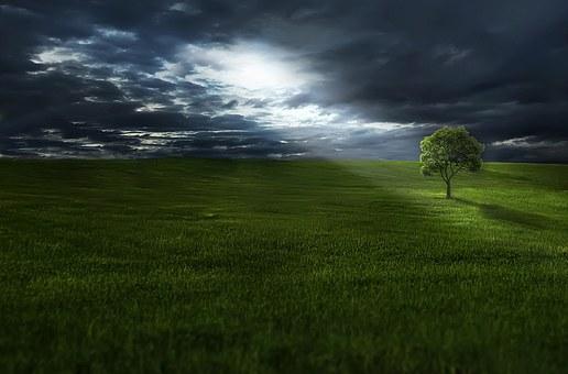 sunlight_tree_green.jpg