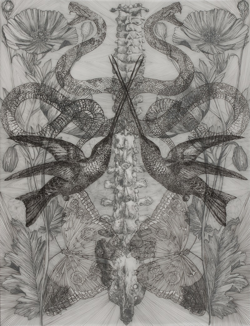 Danielle Rae Miller, Two Hummingbirds, ink on vellum, 26inx20in-web.jpg