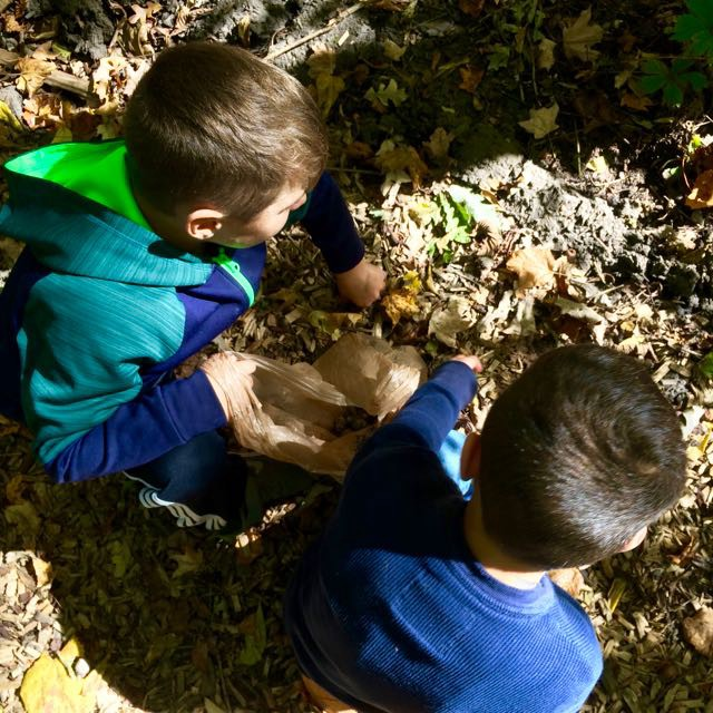 The hunt for the acorns proved to be the most thrilling part.