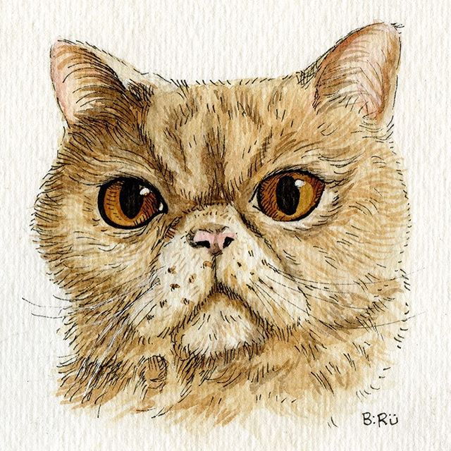 """Percy"" #persiancat #smooshface #catsofinstagram #petportrait #watercolors #doodle #staedtler"