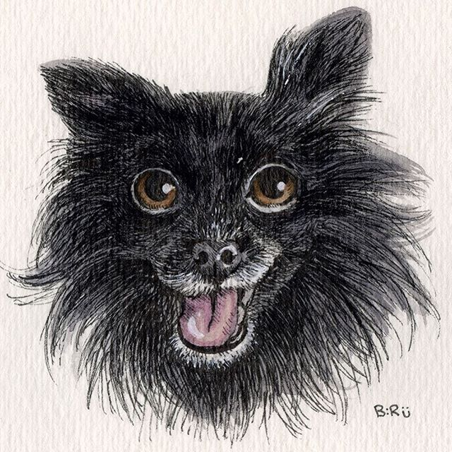 His name is Bruce. #papillon #papillonsofinstagram #fluffy #pup #dogsofinstagram #petportrait #watercolors #ink #doodle