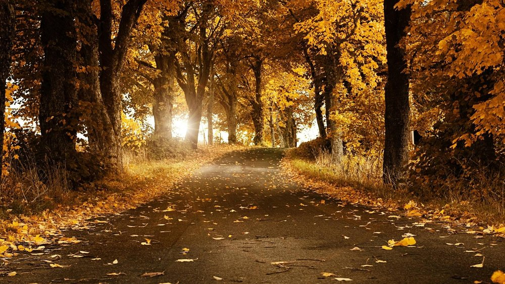 Amazing-Nature-Road-Autumn-Forest.jpg