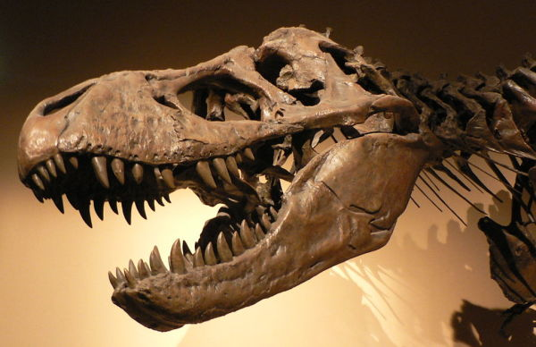 T-Rex: not the purview of archaeologists, but still awesome. Image: