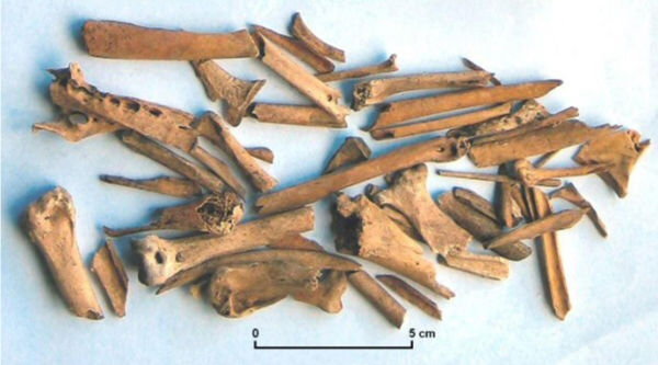 A selection of bird bones from the site. Image: M. Trotter.