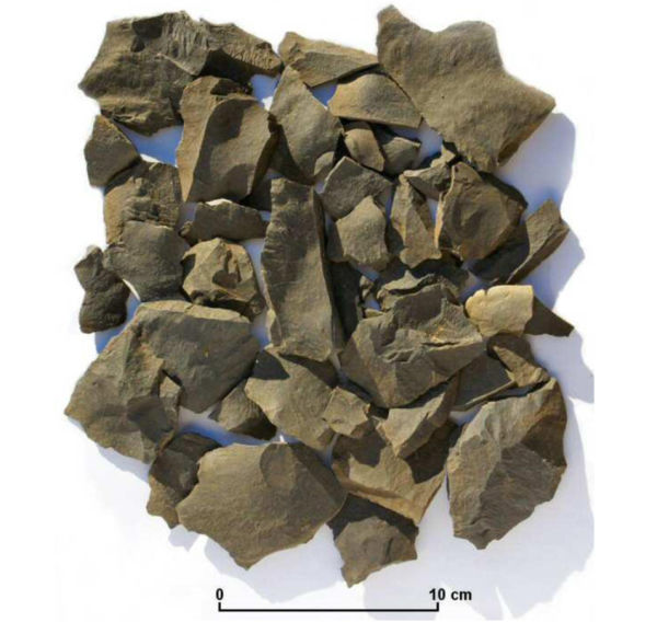 Waste flakes of basalt from tool manufacture. Image: M. Trotter.