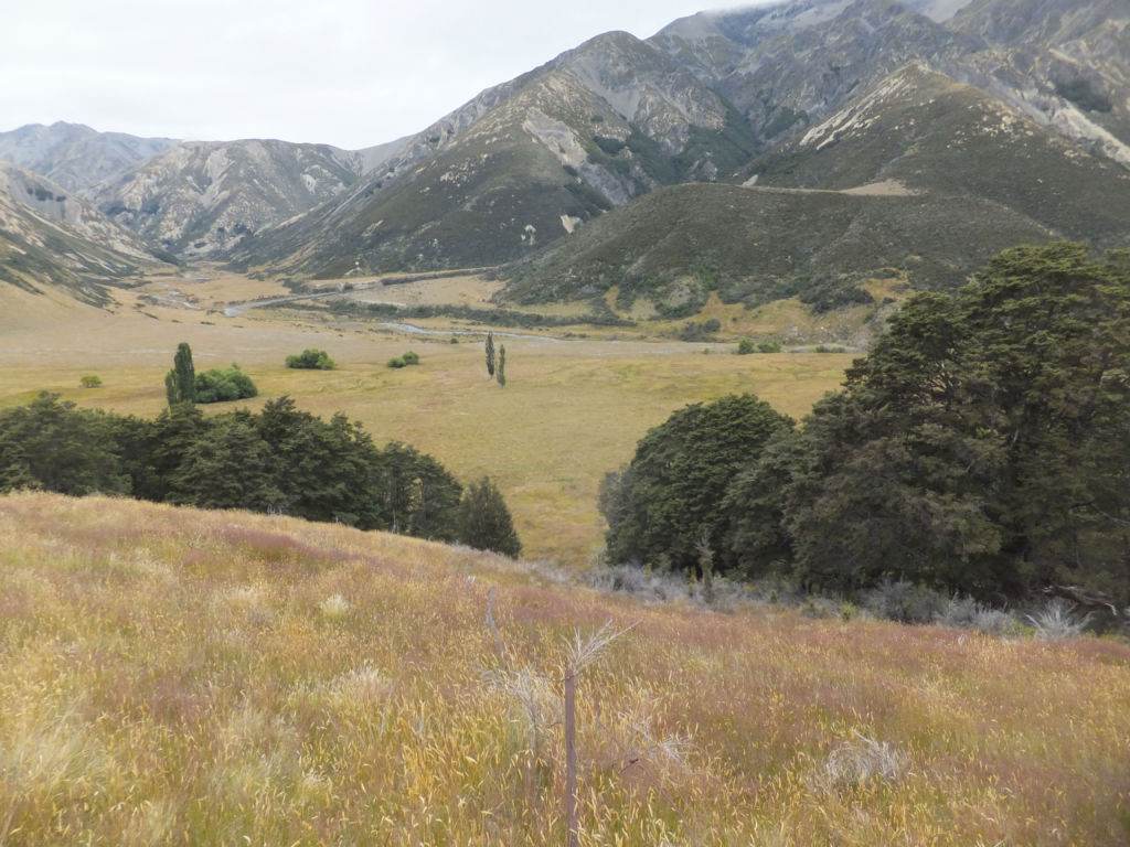 Looking down on the Stanley Vale homestead site, showing some of the exotic plantings. Image: K. Watson.