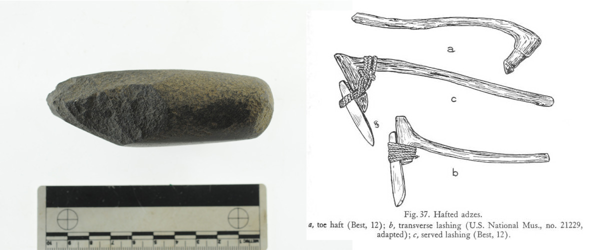 Side view of basalt adze (left), and an image showing hafting techniques (right), from Hiroa, 1949: 185.