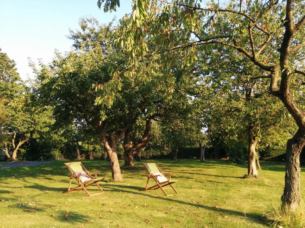 Rawhorizons-orchard-hi-res.jpg