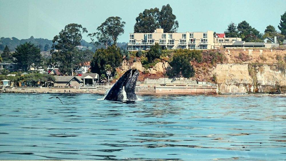 Whale-Apt Bldg.jpg