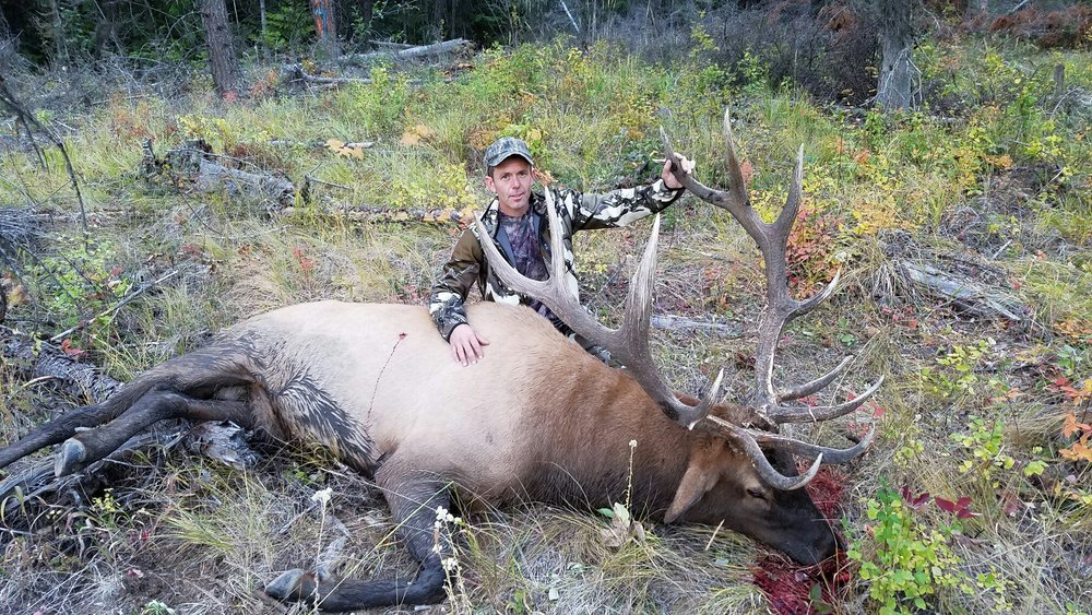 Washington State- Elk, 2016