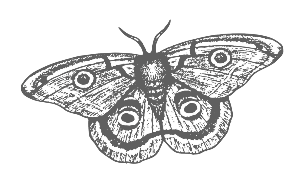 Smoke & Mirrors Logo Final - just moth (1).png