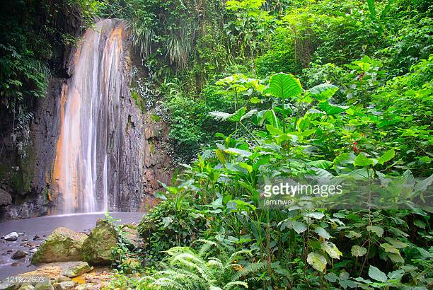 Toraille Waterfall - Book tickets online for your personalized tour of the iconic Toraille Waterfall located deep in the lush, green forests of western Saint Lucia.