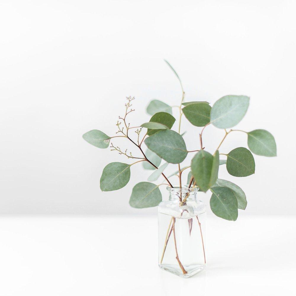 Eucalyptus in Vase-Right Justified.jpg