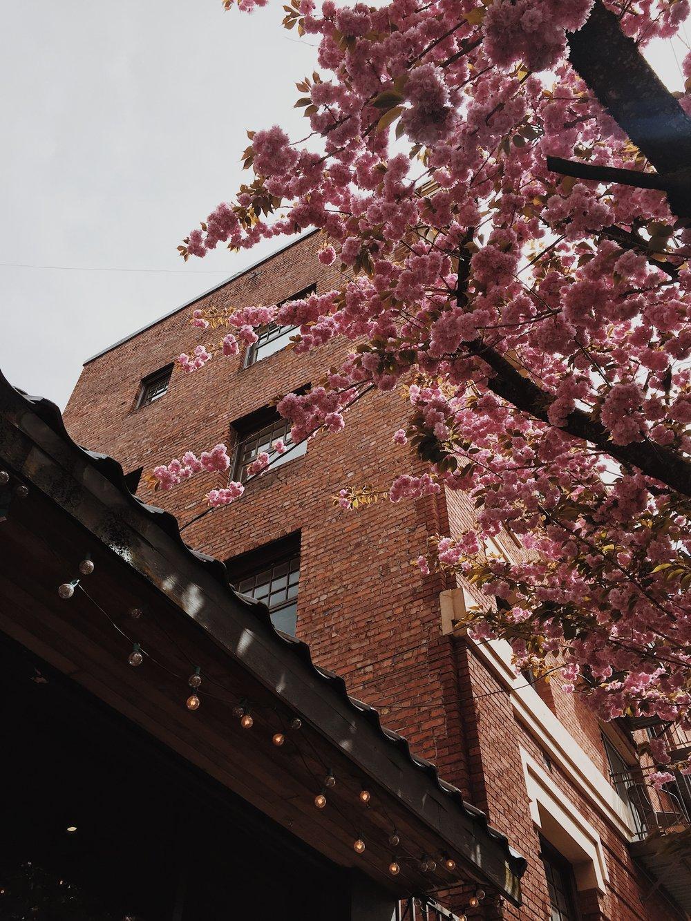 spring in Portland <3