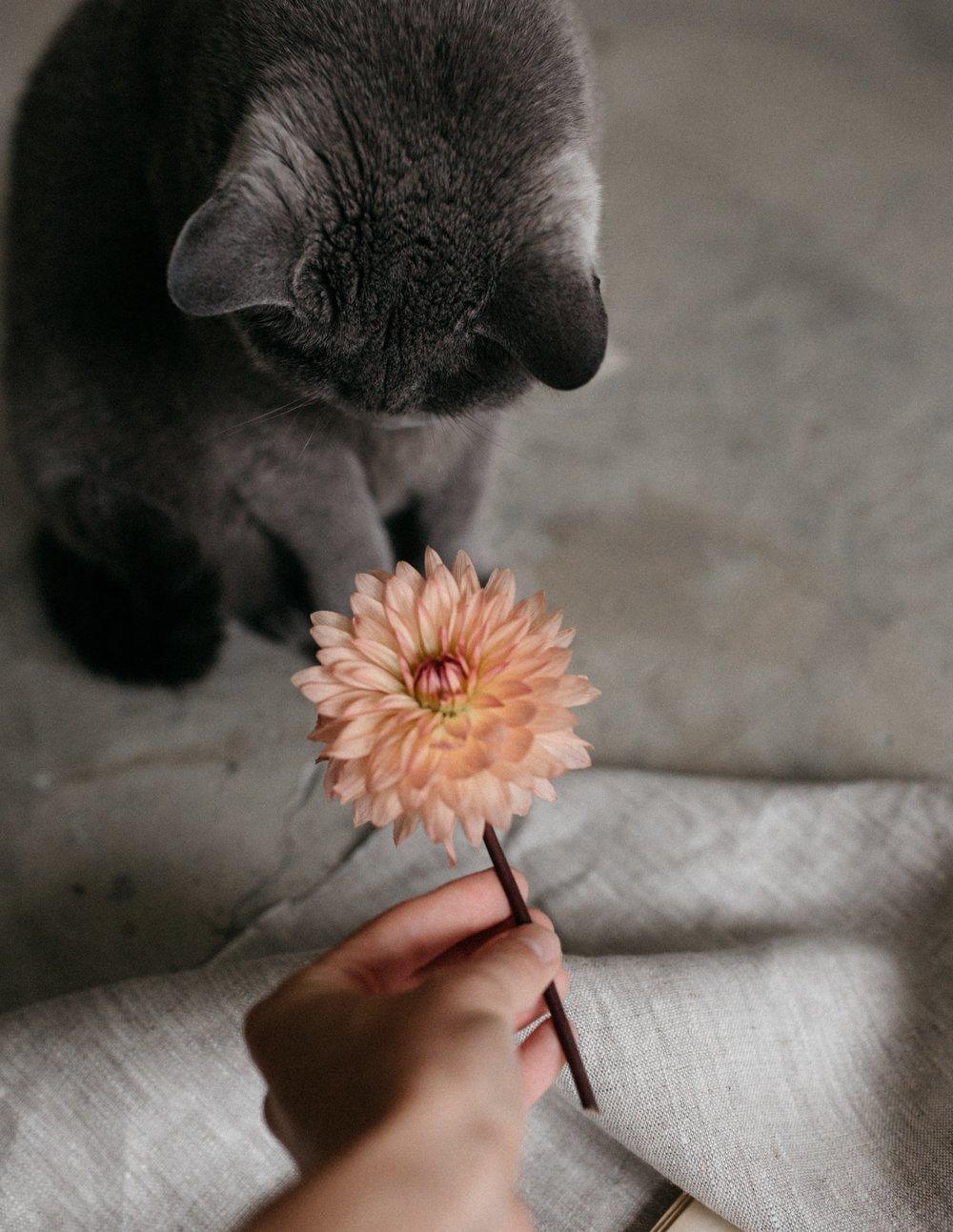 FAVORITE SOCIAL MEDIA CATS -