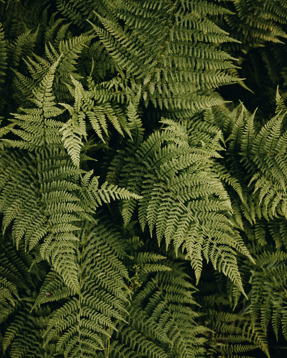 mountain adventure ferns