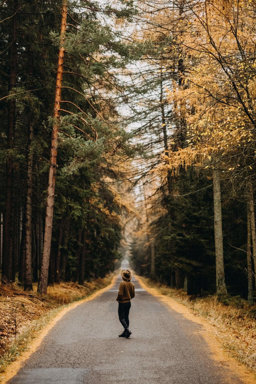 woods-everlane