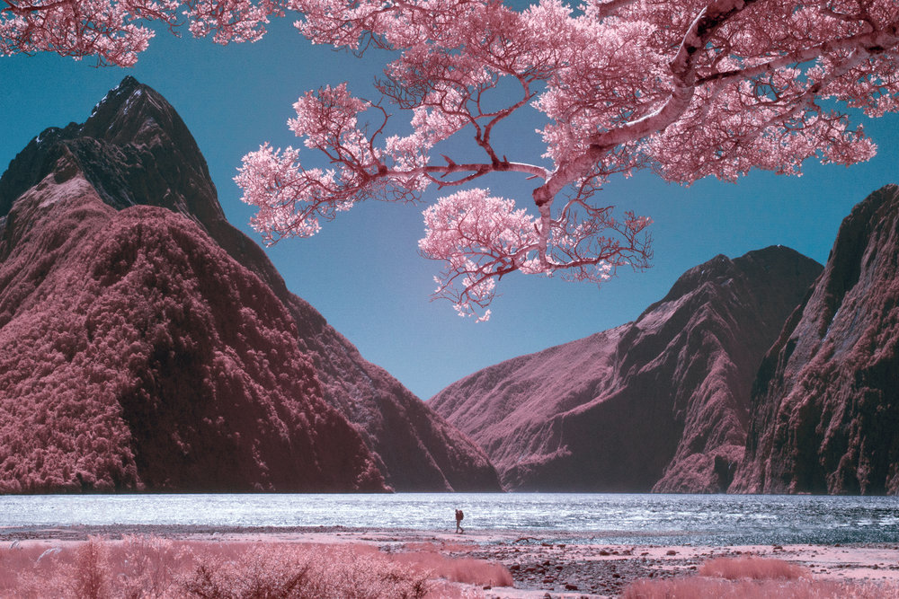 Paul Hoi Group Study Infrared Photography New Zealand 1