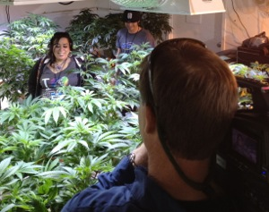 Cannabis Group Tours  Grow Room
