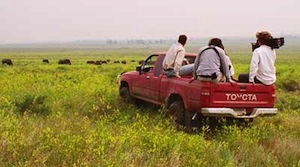 Filming Buffalo in a Montana Prairie