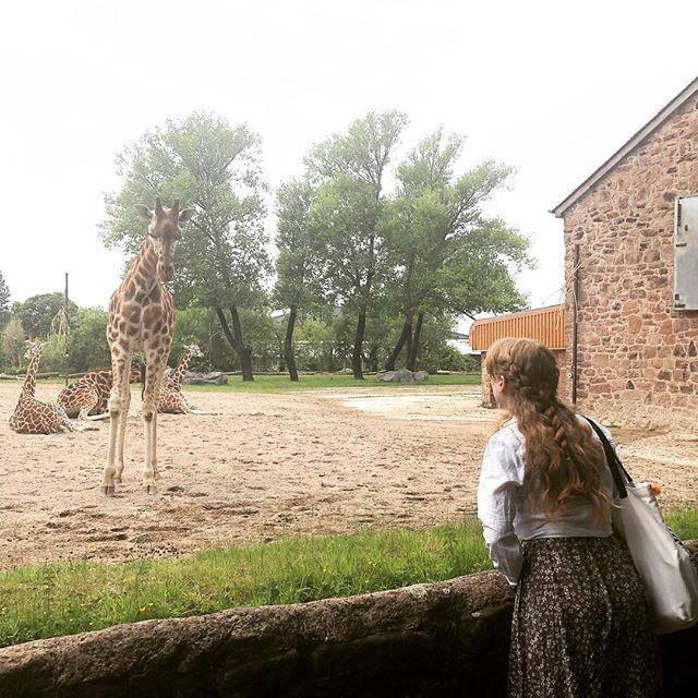 Giraffes will never let you down 🦒  #author #authorsofinstagram #bookstagram #chesterzoo