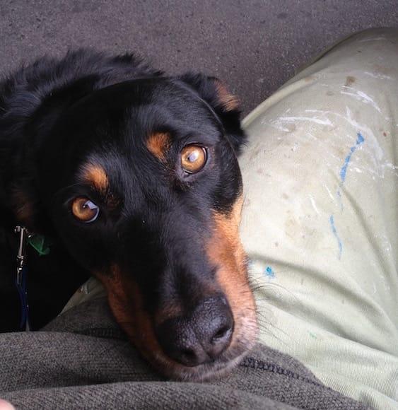 FRASER THE DOG, ASSISTANT FURNITURE MAKER