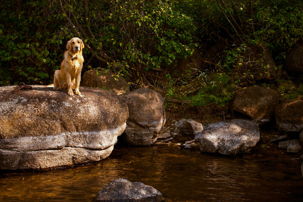 Lucy on the Creek, Truckee CA, Canon DSLR