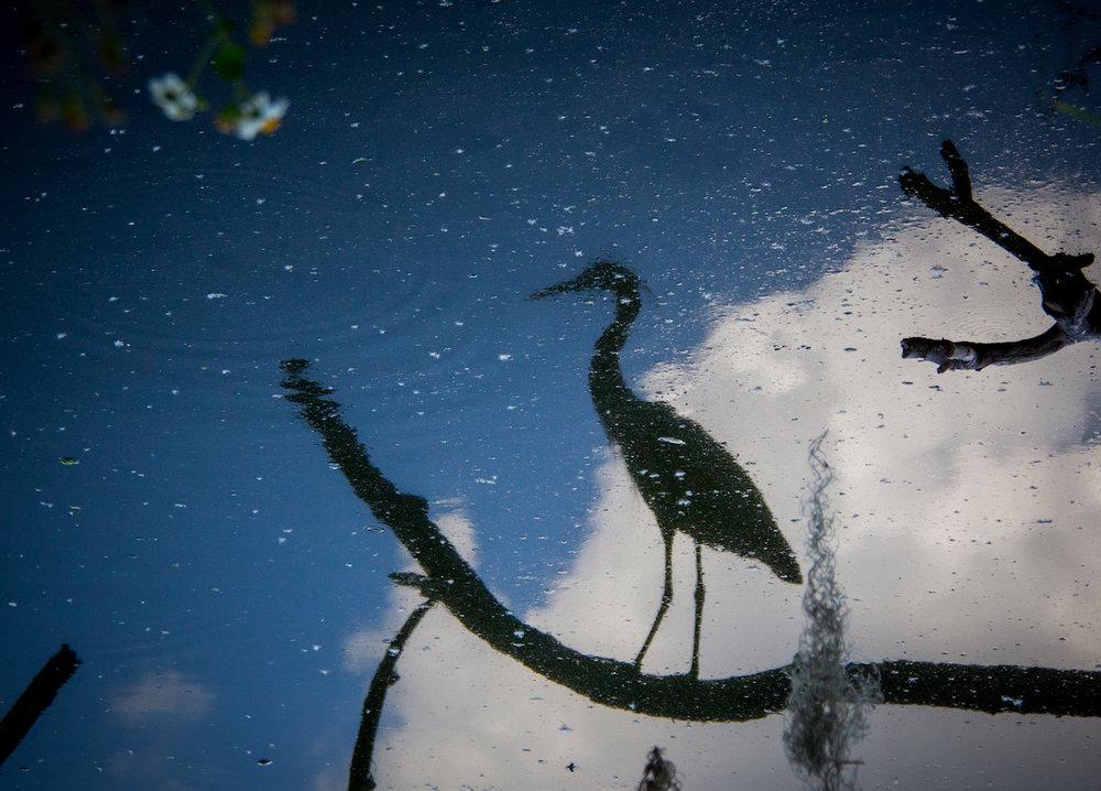 Heron Silhouette, Lakeland FL, Canon DSLR