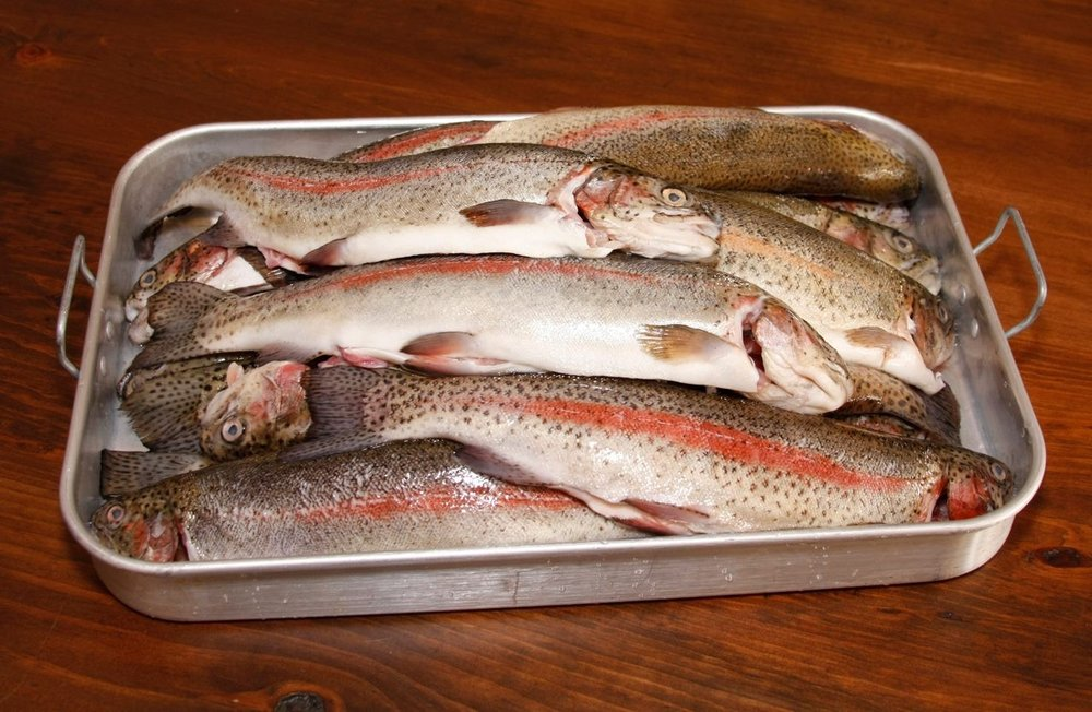 Tip to Tail fish filleting class