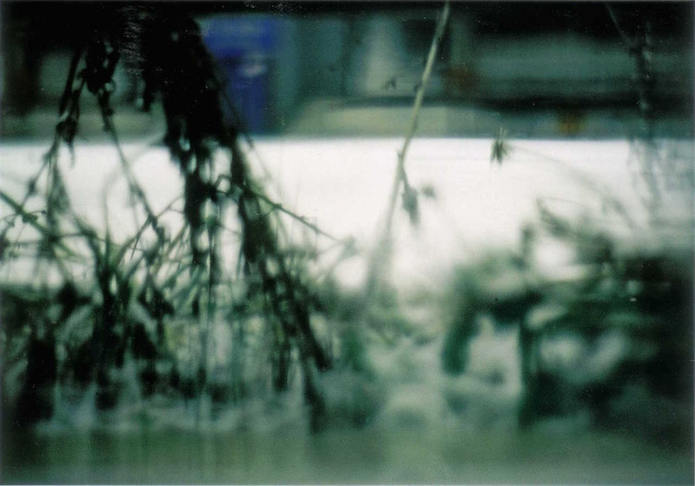 White snow9.jpg