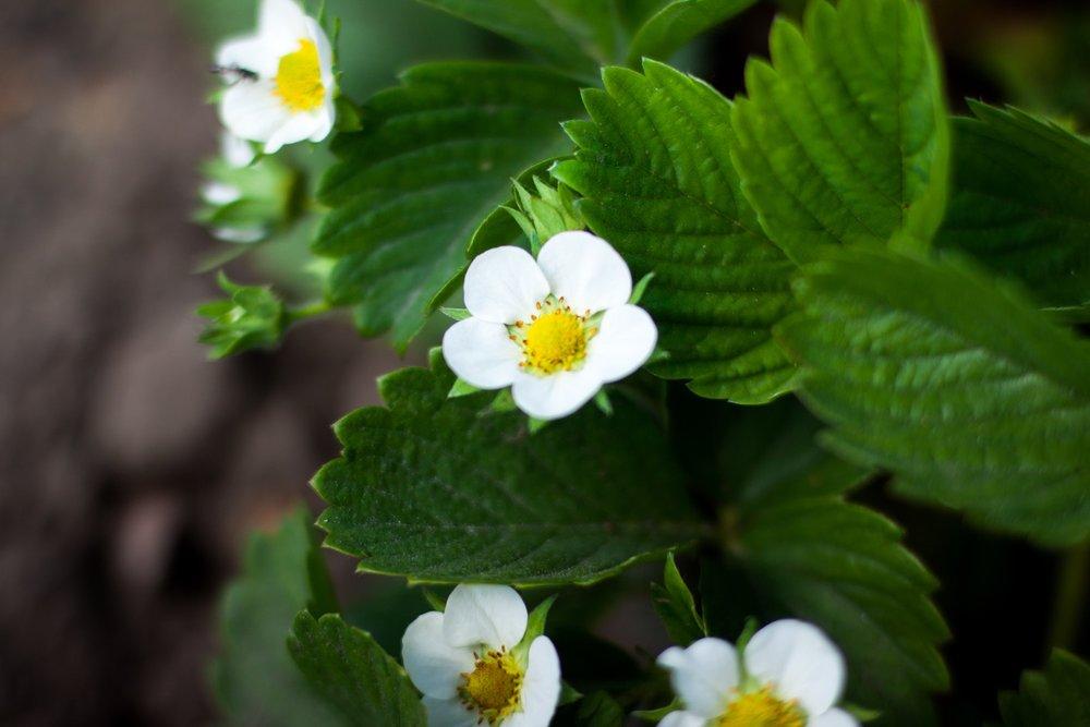 plantflower.jpg