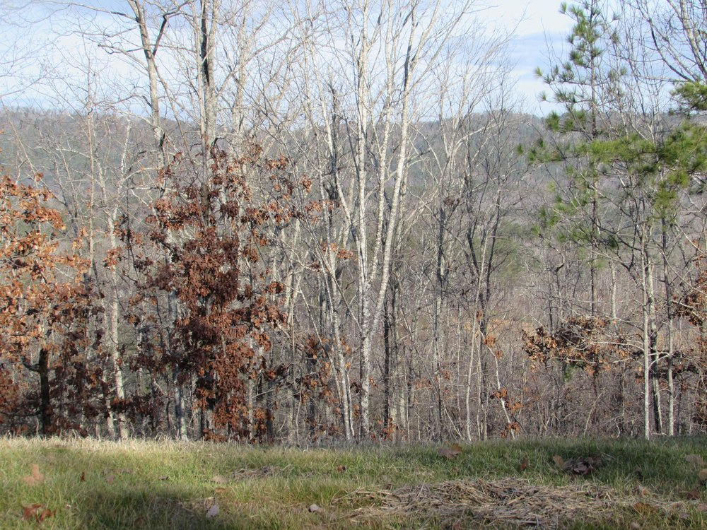 Homesite #8   List Price: $198,000  Size 1.64 acres  Section: Pelham  Street: Lindsay Lane