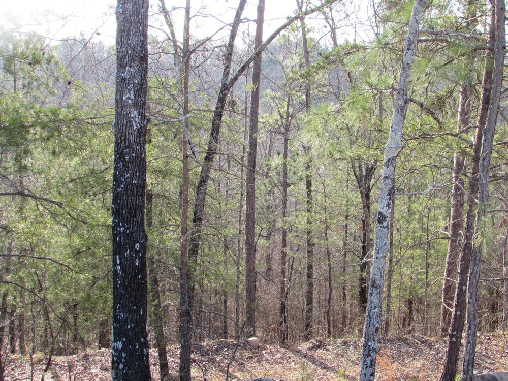 Homesite #48   List Price: $175,000     Size: 2.51 acres  Section: Pelham  Street: Lindsay Lane