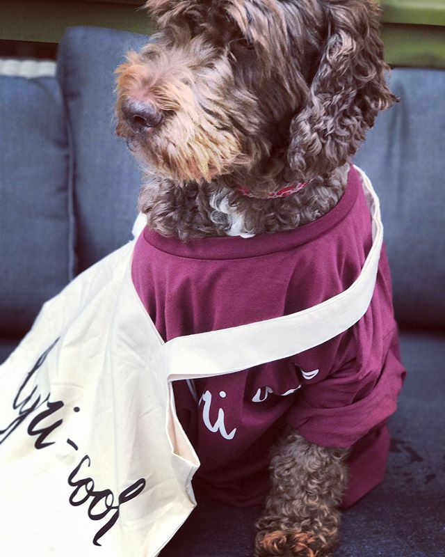 GUESS WHAT HAS ARRIVED.... very soon new t-shirts and TOTE BAGS will be up for sale.  Beautifully modelled by @hamishthehandsomedogg in honour of this month's charity- GUIDE DOGS AUSTRALIA.  COMING SOON!  #lyricool #sustainablefashion