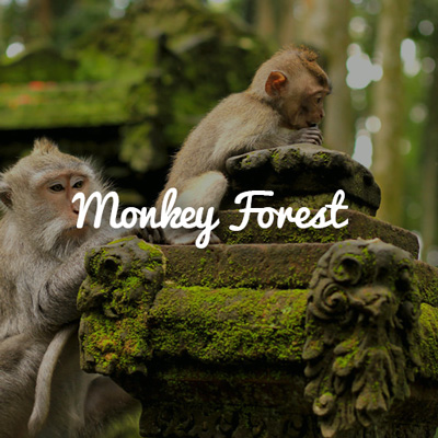 Visit Monkey Forest, Ubud in Group Trip to Bali