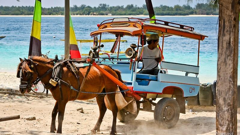 Gili Horse Carts - Cidomo