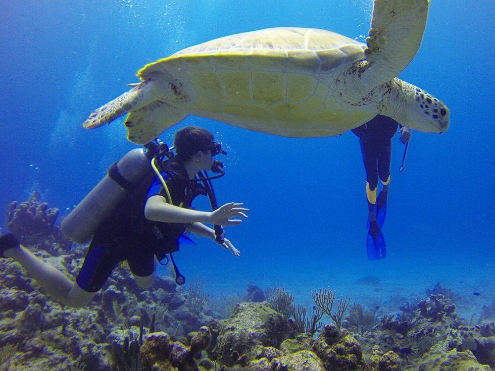 Photo with Turtle while Scuba Diving with When in City