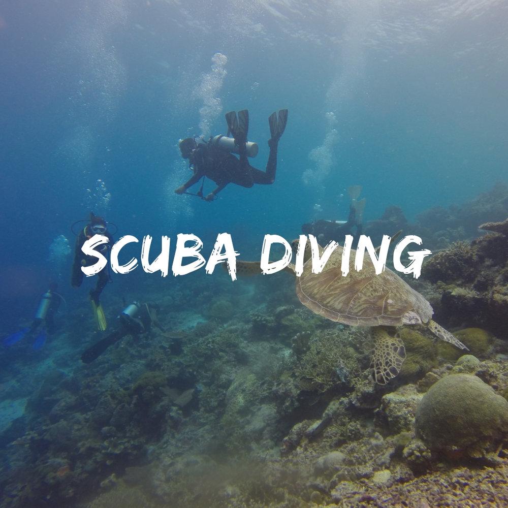 Scuba Dive on a Group Trip
