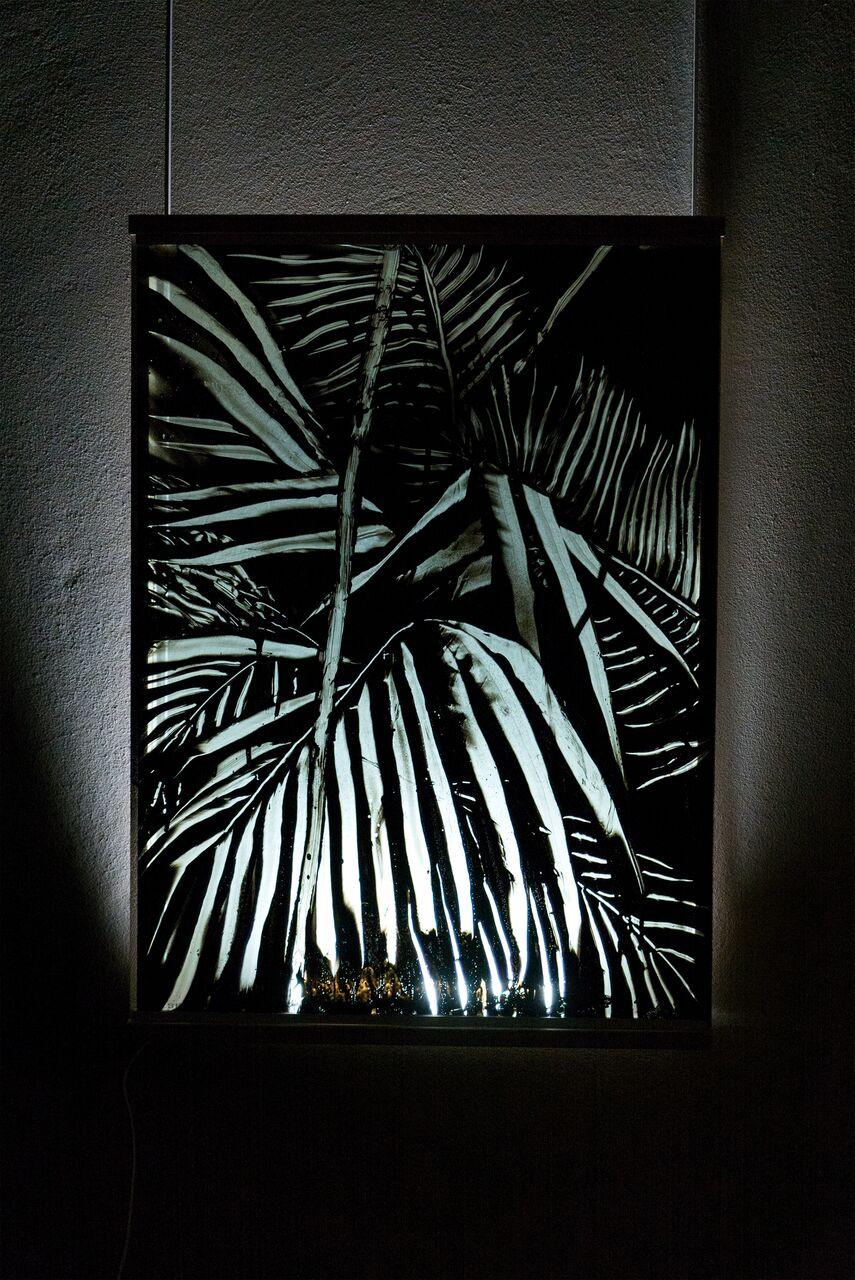 Antwerpen window plant  56 x 76 cm