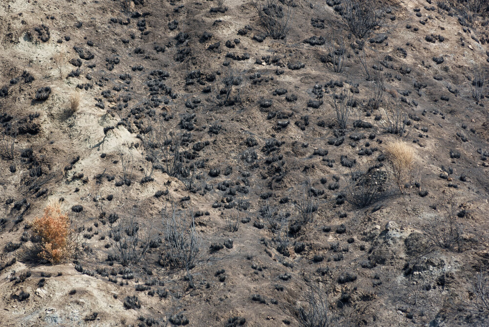 A terrain wiped out by a wildfire set up on August 4, 2018, near Condofuri Superiore, on the Aspromonte National Park borders.