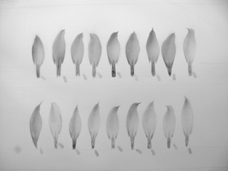 Jayne Ivimey,The Red List, 2017 drawings