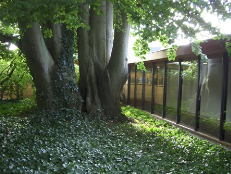As you see here, trees can be safely planted close to buildings, providing shade and greenery and anchoring the soil in fragile conditions. They provide boundaries, shade, shelter and rich habitats for wildlife.Many studies show these are benefits conducive to human health as well as important for biodiversity.   https://www.forestry.gov.uk/pdf/Health_Benefits_of_Street_Trees_29June2011.pdf/$file/Health_Benefits_of_Street_Trees_29June2011.pdf