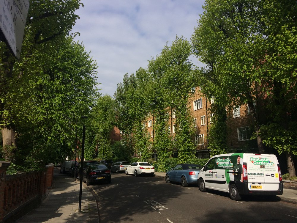 A tree-lined street in London. All these trees are privately planted behind people's garden walls yet they benefit the whole street-scape.