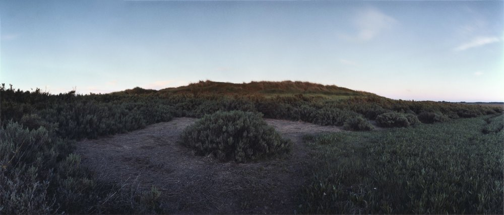 Re-visiting  Suæda fruticosa , Blakeney Plate n°303, Blakeney, June 2014; 52°58.546'N 1°0.015'E