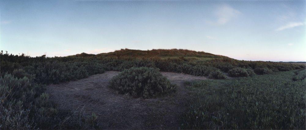Re-visiting  Suæda fruticosa , Blakeney Plate n°303, Blakeney, June 2014; 52°58.546'N 1°0.015'E