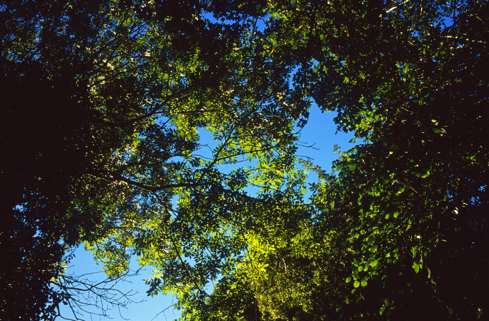11_Justin Partyka - Walnut Tree Farm.jpg