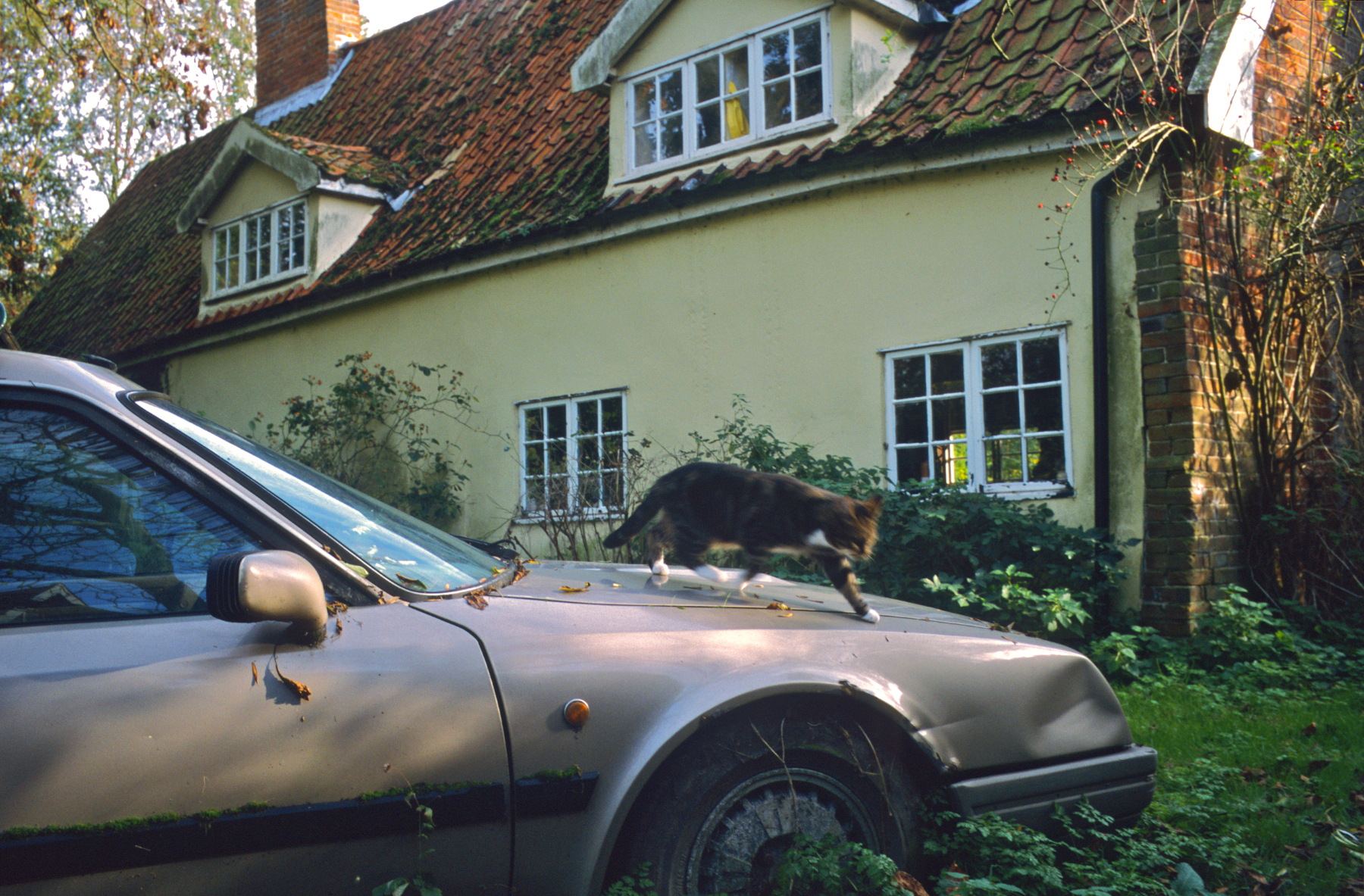 Citroën CX Safari and Cat, Walnut Tree Farm, Suffolk, 2006  28.5 x 42 inches, edition of 3;  22 x 32 inches, edition of 5
