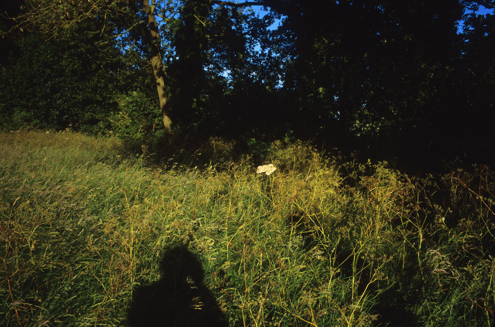 Shadow, Cowpasture Lane, Suffolk, 2014; 28.5 x 42 inches, Edn. of 3; 22 x 32 inches, Edn. of 5