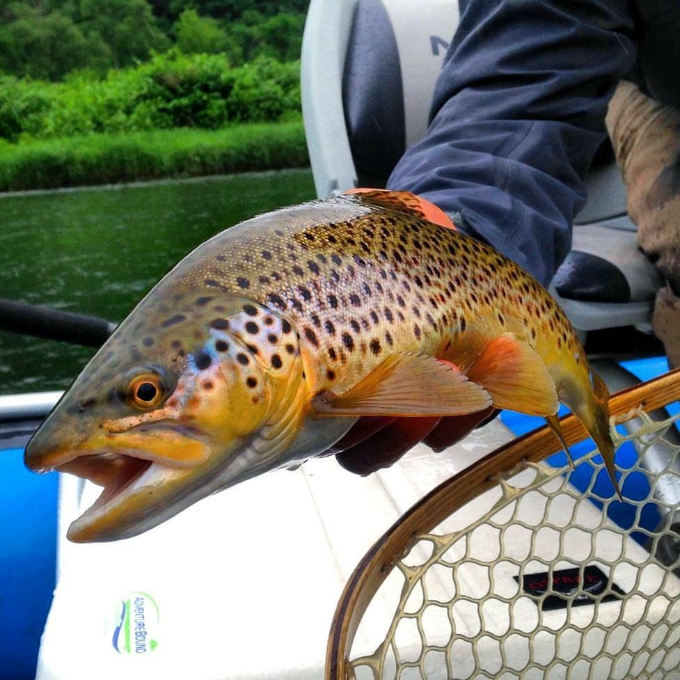 CHASE WILD TROUT ON WORLD RENOWNED TAILWATERS