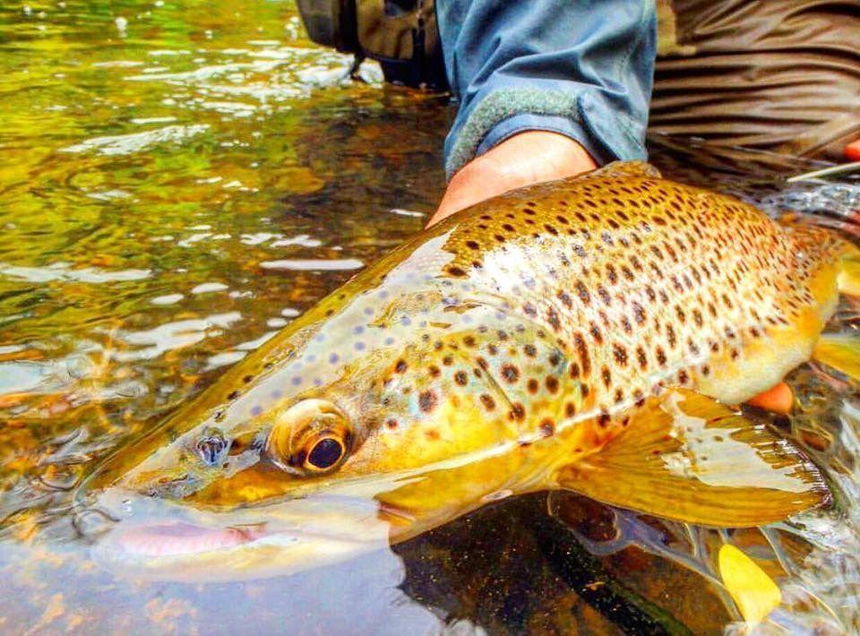 TEST YOUR SKILL ON THE MOST TECHNICAL LIMESTONE AND SPRING CREEKS IN THE STATE
